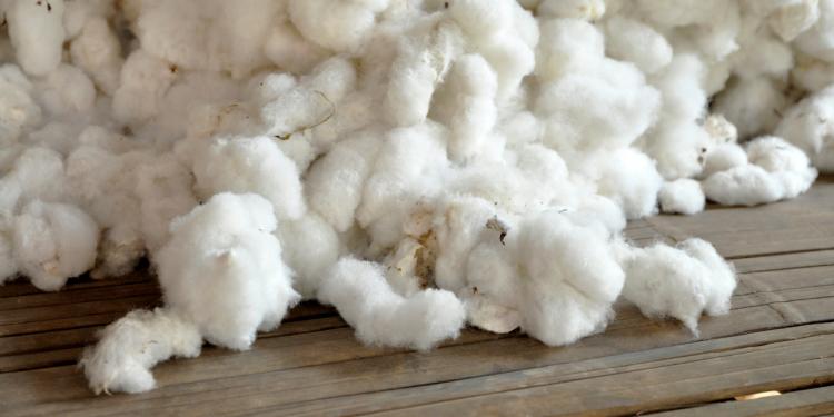 Fashion Revolution: Nachhaltige Rohstoffe in der Textilindustrie