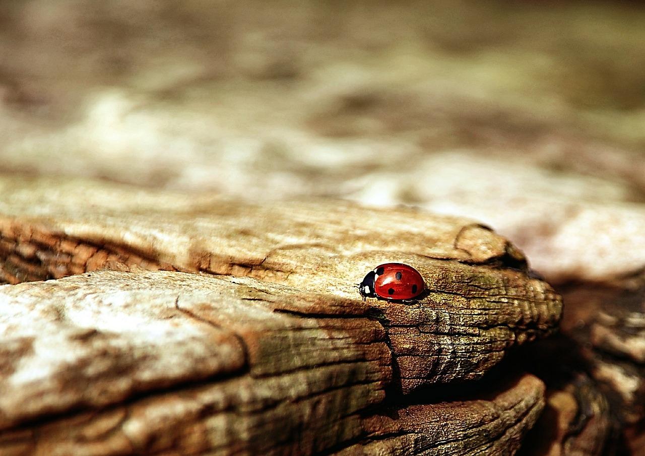 Das Glück kommt aus dir...Marienkäfer auf Holz