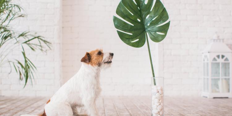 12 Challenges, die dir helfen bewusster, gesünder und minimalistischer zu leben