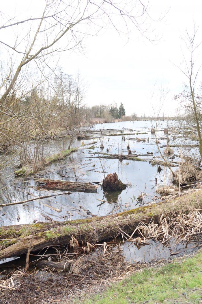 See in Schutzgebiet